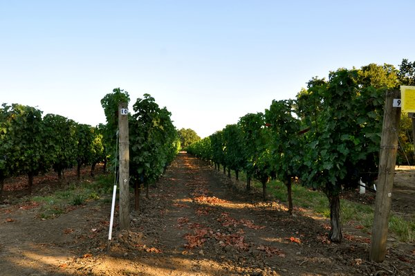 Amerikanischer Wein - Weinbaugebiet Kalifornien - Wine-growing area California