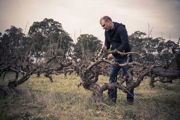 Australischer Wein - Barossa Valley - The Standish Wine Company